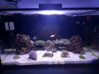 Nuvo 20G - all included full tank setup