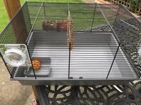 Hamster/ gunner pig cage