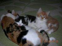 Adorable and friendly kittens are looking for a loving home.