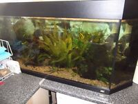 200 litre complete fish tank set up,tank,filter,lights,plants and fish