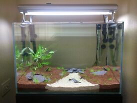 OptiWhite 90l +40l Fishtank +filter+substrate and more