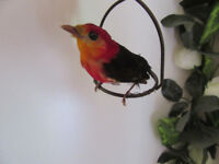 Taxidermy Bird - Crimson Hooded Manakin + LED Bird Cage
