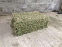 Conventional / Small Bale Meadow Hay for horses, cattle, sheep