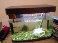 Tropical fish tank. £20