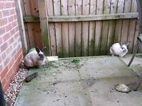 2 amazing rabbits for giveaway