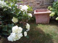 Extra large square terracotta pot.