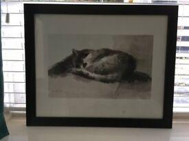 Black and White Picture of a Cat, Farnham, £5