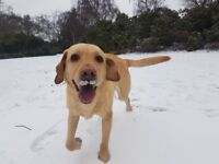 Sucessful Dog Walking Business for Sale