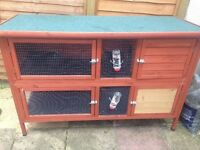 Lovely blue lion head rabbit for sale