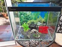Fish Tank ClearSeal and Filter