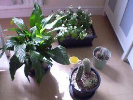 Bundle of House Plants, Bundle House Plant Books