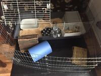 Hutch Rabbit/guinea pig cage- everything you need brand new