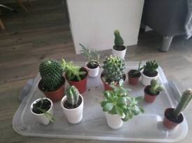 Cacti and succulent selection