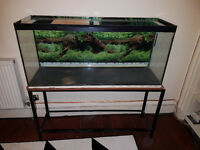 "FREE 48""x15""x21"" aquarium to anyone willing to carry it down 4 flights. Slight leak needs resealed."