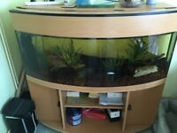 Bow front fish tank and stand