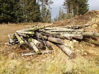 Used Telegraph Poles
