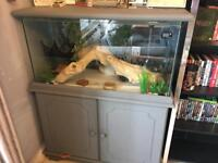 Leopard gecko and full vivarium set up