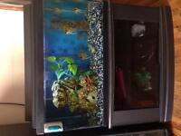 Two fish tank with fish