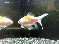 Fish tank and fish quick sell