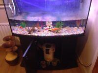 Big fish tank - mint condition