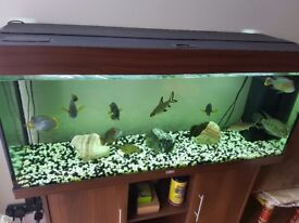 Juwel Rio 240 Aquarium and Cabinet with extras