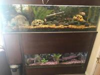 Double fish tank unit and pumps
