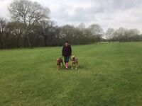 DOG WALKING/SITTING/PUPPY TRAINING SERVICES