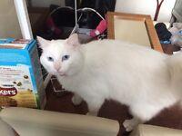 White female cat