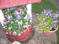 stone wishing well planter,