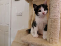 Adorable kittens looking for a new home