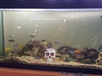 3ft fish tank with fish