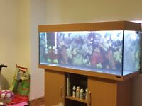 Jewel Rio 240L Beech Cabinet And fish Tank