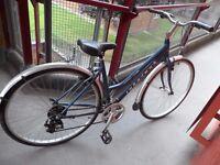 Ridgeback vintage style ladies bike