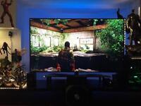 """LG 75"""" 4K ULTRA HD HDR LED TV"""