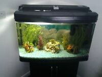 Fish tank with stand complete set up size approx 32x20x15