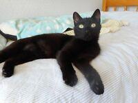 Friendly young female cat seeks loving home
