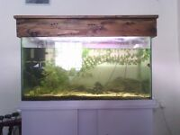 FISH TANK/AQUARIUM + ALL ACCESSORIES AND/OR FISH (Mountain Minnows, Weather Loaches) LOT OR SEPERATE