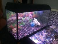 Fish tank for sale full set up