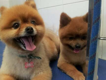 Sunday & Monday Pet GROOMING Services
