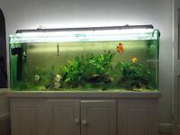 fish tank 5ft x2