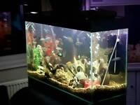 200ltr fish tank