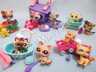 Littlest Pet Shop Lot 5 Random Pcs  2 Kitten Cats   3 Accessories  Surprise Gift