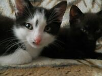 3 lovely kittens looking for new home