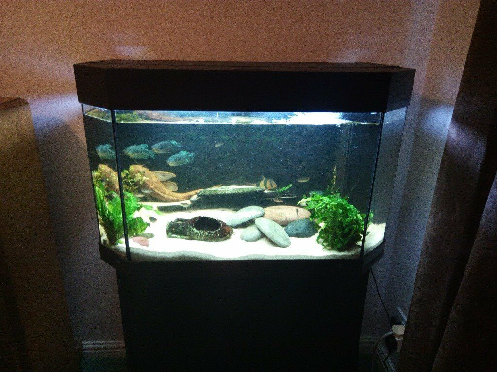 aquarium 130l fish tank juwel panorama 80 in fleet hampshire gumtree. Black Bedroom Furniture Sets. Home Design Ideas