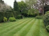 PERFECT MOWING LAWN CUTTING FREE QUOTE HEDGE CUTTING GARDEN MAINTENANCE