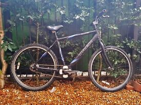 "Trek Cruiser 6061 T6 City Bike frame size 19.5"" L 6 Speed Shimano Nexus"
