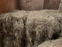 Small Bale Hay from Summer 2019