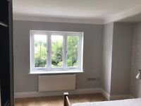 Professional painter/ decorator London/Essex