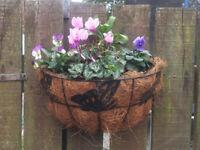 Winter flower baskets