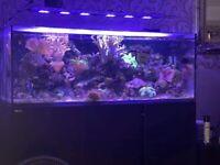 Fish tank setup